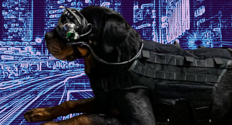 12th edition | augmented army puppies